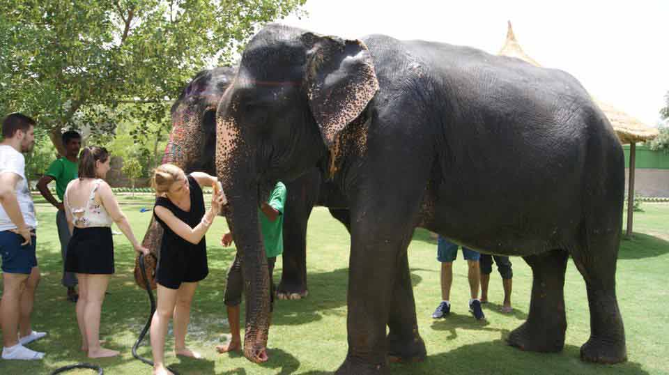 elephant care inde